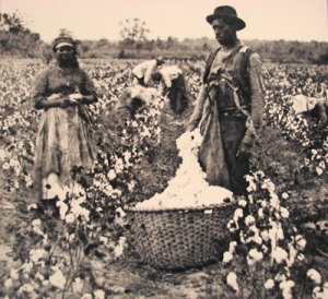 Toiling on the cotton plantation--the camera did not idealize.